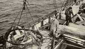 Historical image of fishermen and cod in a boat