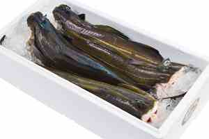 Skrei in a box with ice