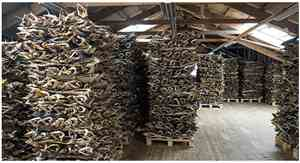 Stockfish arranged in high stacks