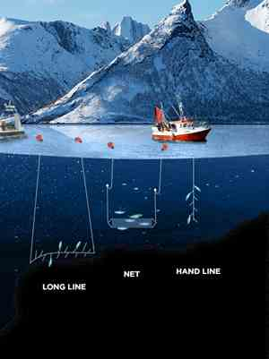Passive fishing gear: Long line, net, and hand-line